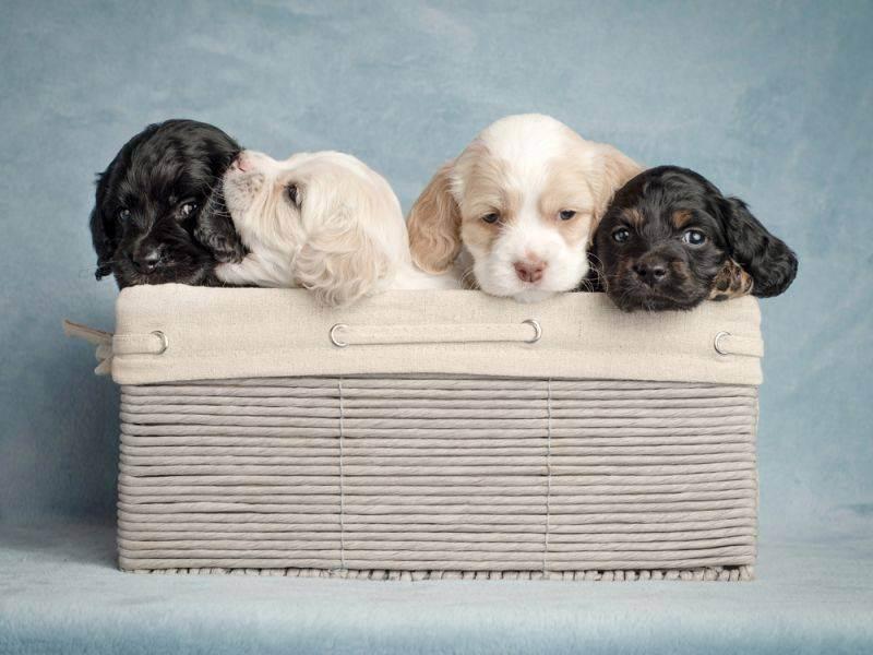 Разведение собак как бизнес: необходимое оборудование и документы. как открыть собачий питомник?