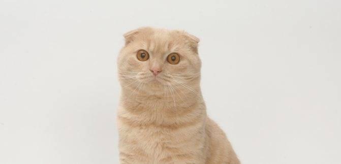 Частое и тяжелое дыхание у кошек после окончания родового процесса