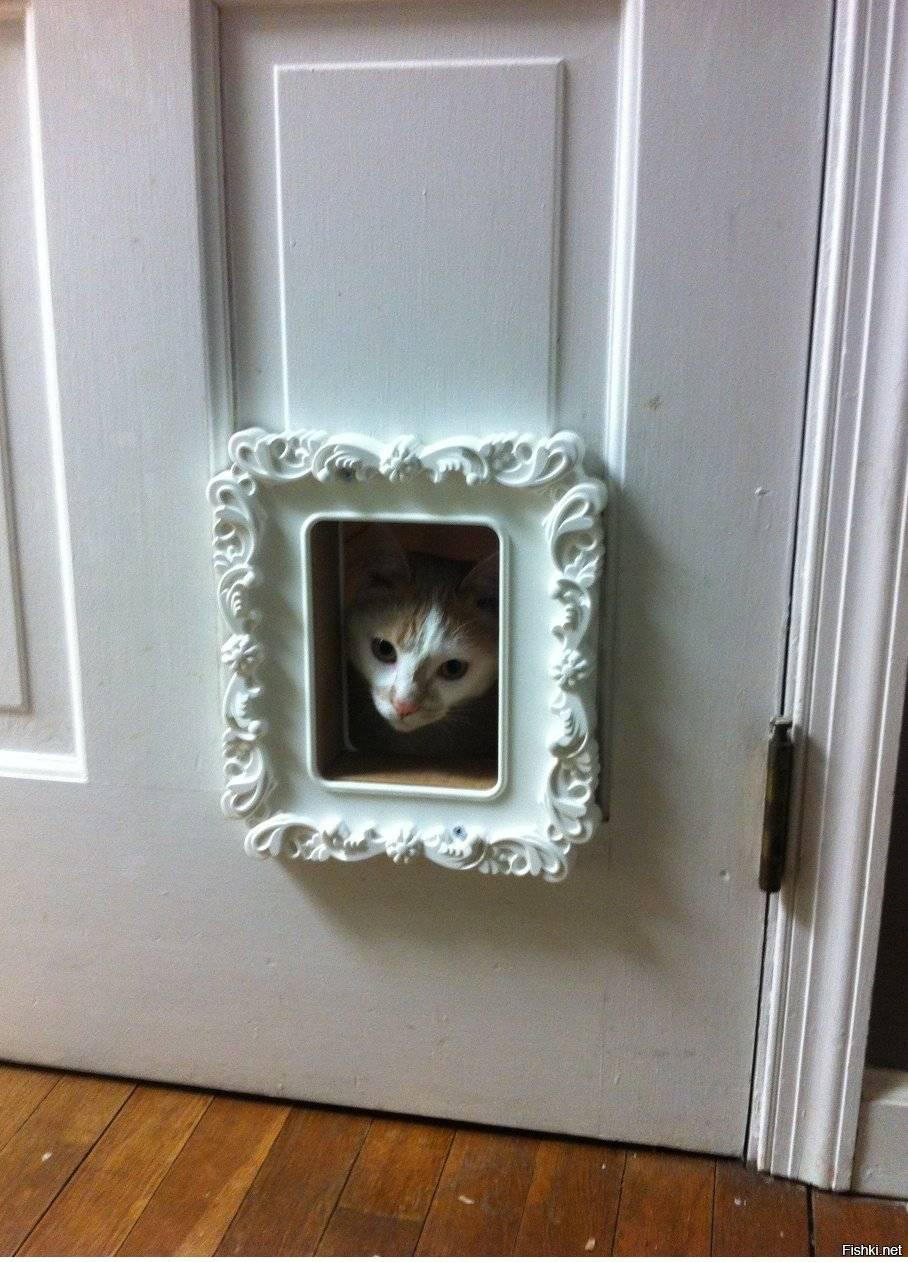 Как выбрать или сделать своими руками дверцу для кошек