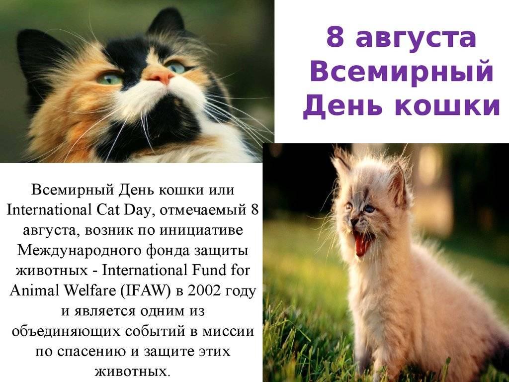 1 марта – день кошек в россии. история праздника, интересные факты о кошках | местное время - новости рубцовска и алтайского края