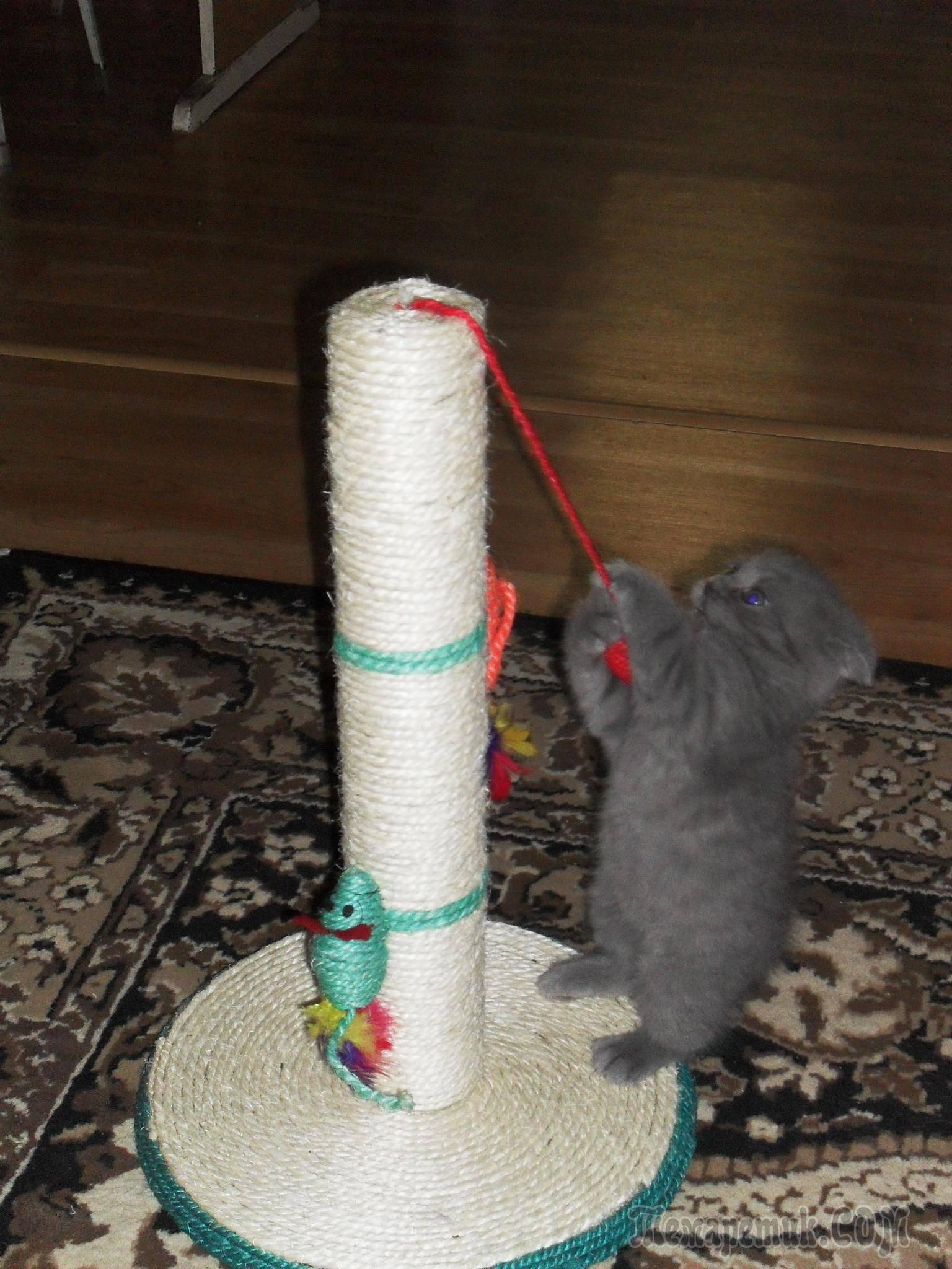Как сделать когтеточку для кошек своими руками (с фото)