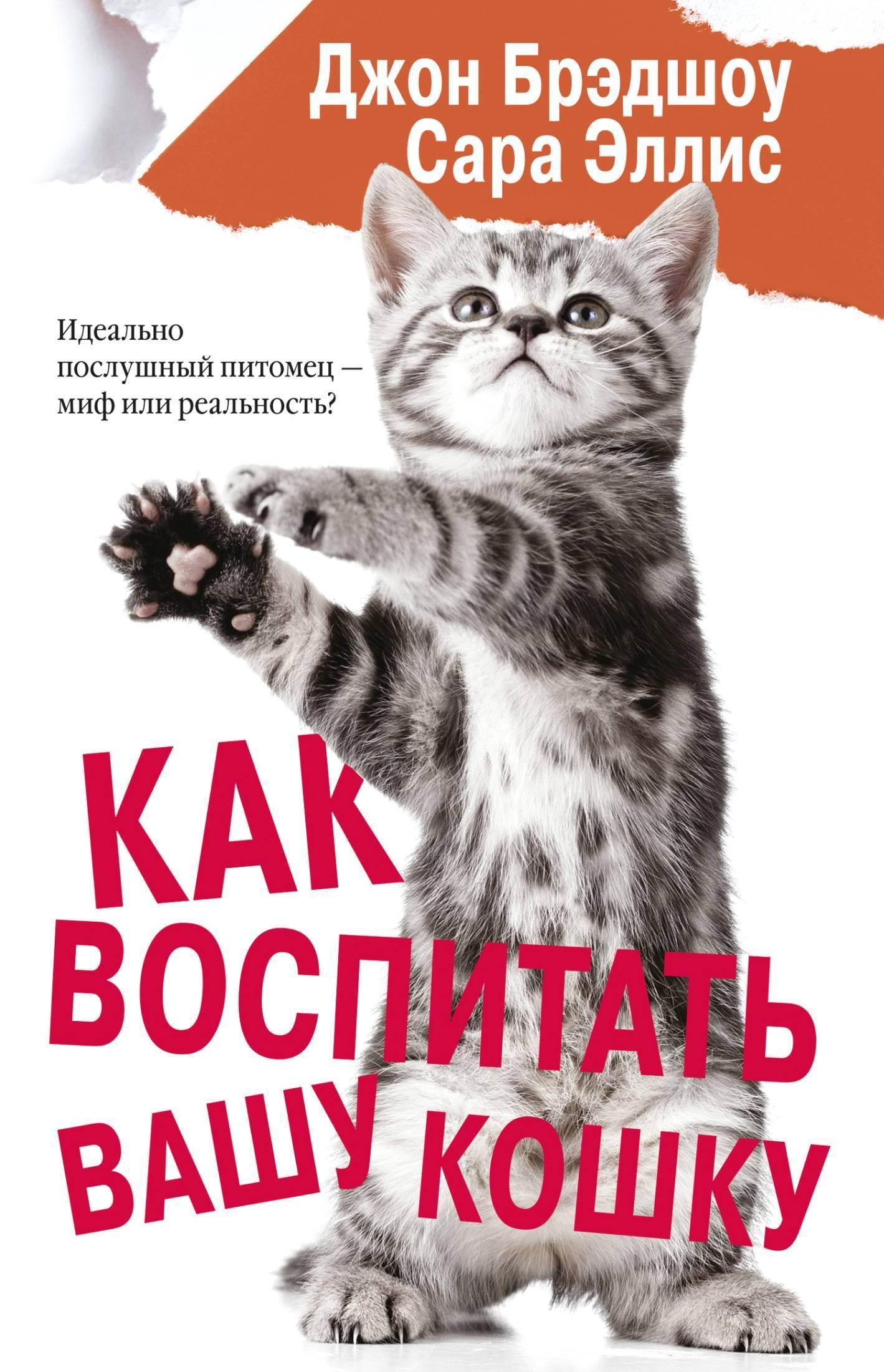 Как приучить кота или кошку к шлейке: быстрая пошаговая инструкция