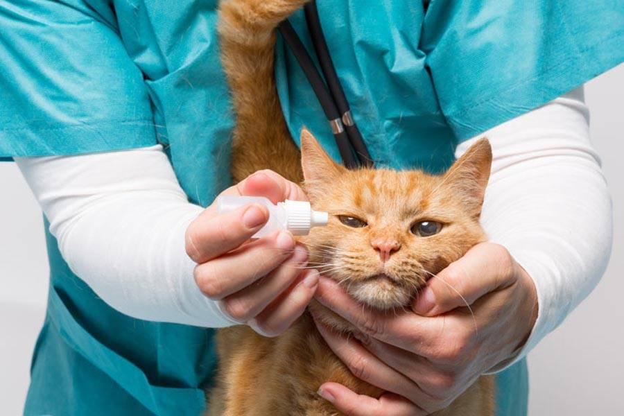Болезни глаз у кошек: как сохранить здоровье питомца