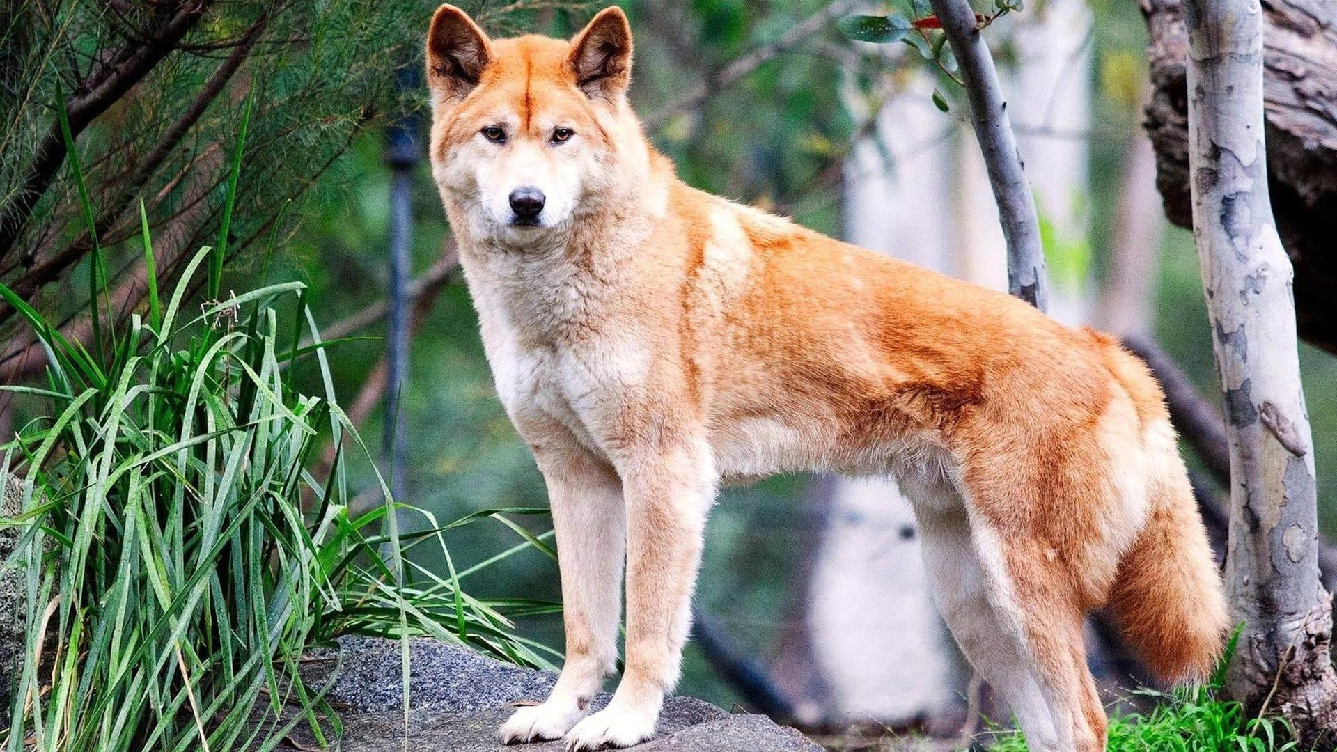 Какие животные обитают в азии — список видов, фото и характеристика