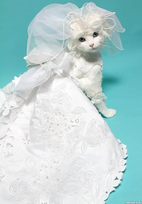 Свадебные коты: дневник группы «куклы тильды и другие примитивные игрушки»: группы - женская социальная сеть myjulia.ru