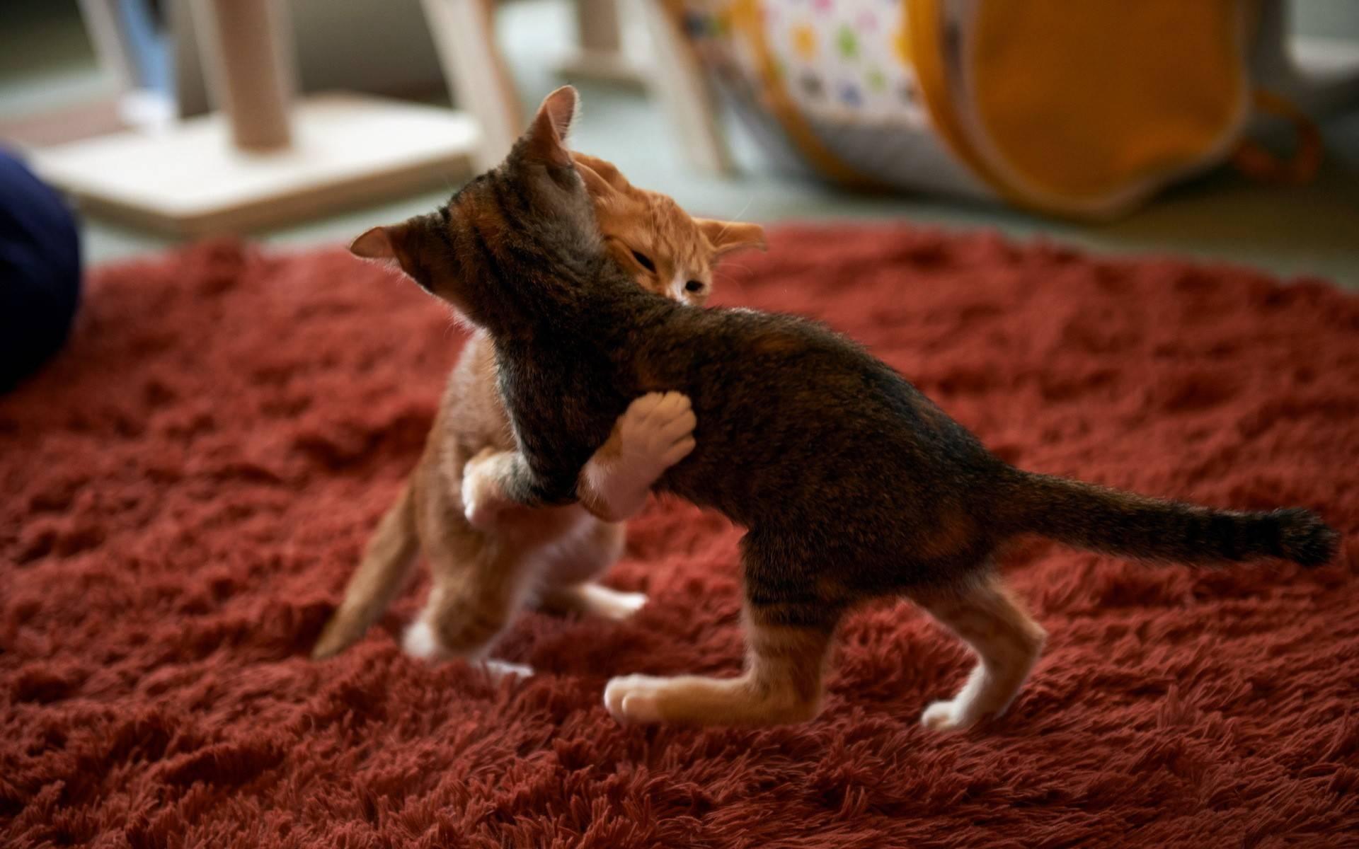 Что означает шипение кошки: самые распространенные причины поведения животного - досуг