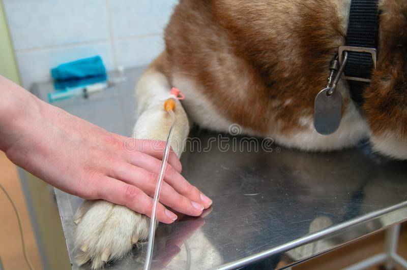 Зачем и как делают капельницы животным в клиниках?