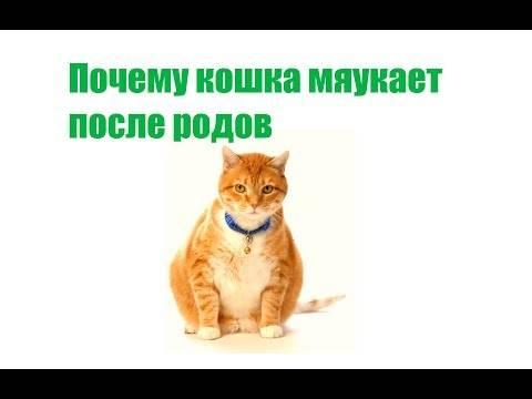 Поведение кошки перед родами: признаки, которые нельзя пропустить