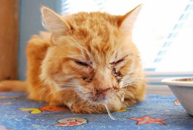 Хламидиоз кошек: невидимый, но опасный