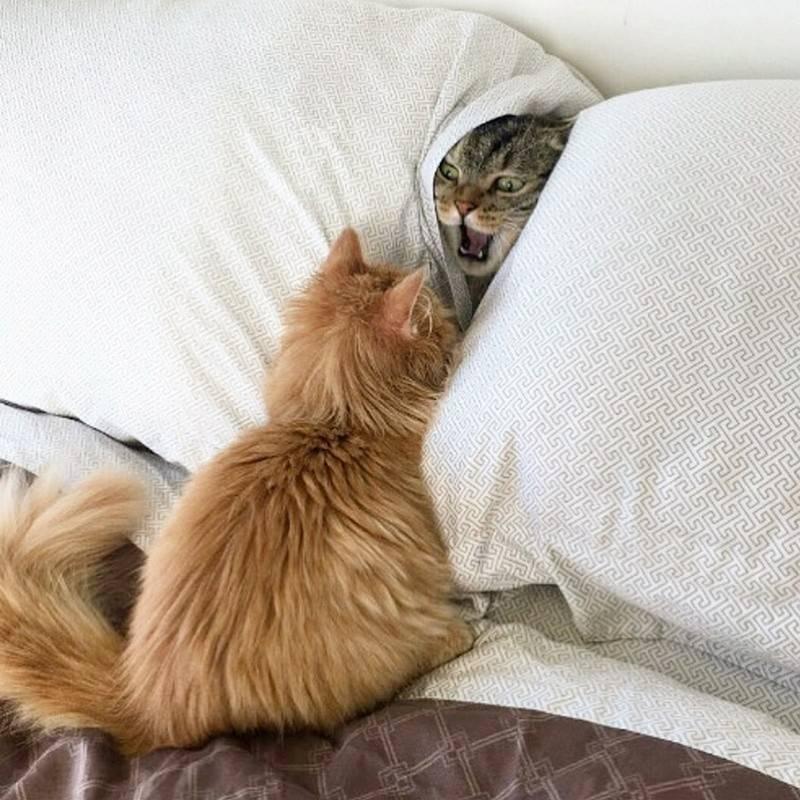 4 хитрости, как приучить кошку спать по ночам