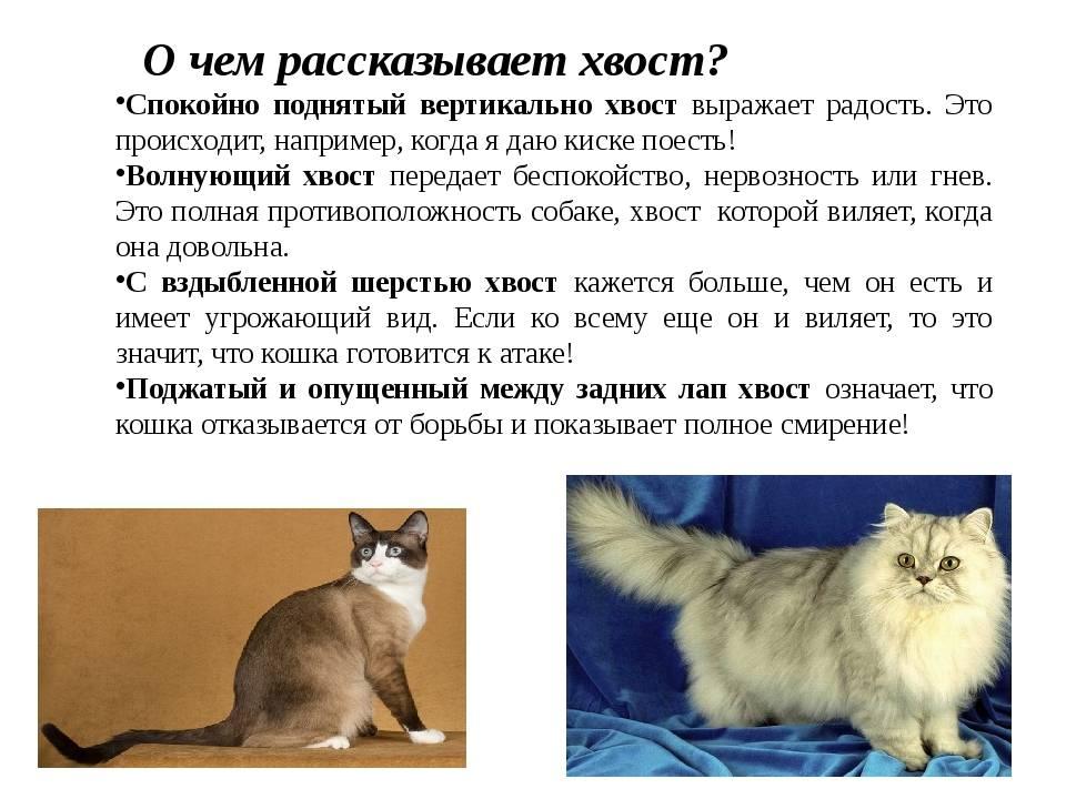 Почему нельзя дергать кота за хвост: строение позвоночника у кошачьих, возможные травмы и их последствия для животных