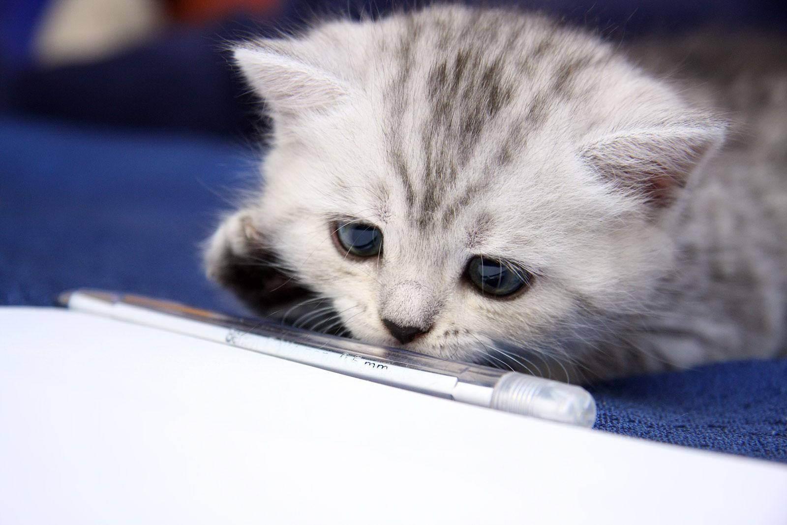 Документы для кошки   мои домашние питомцы