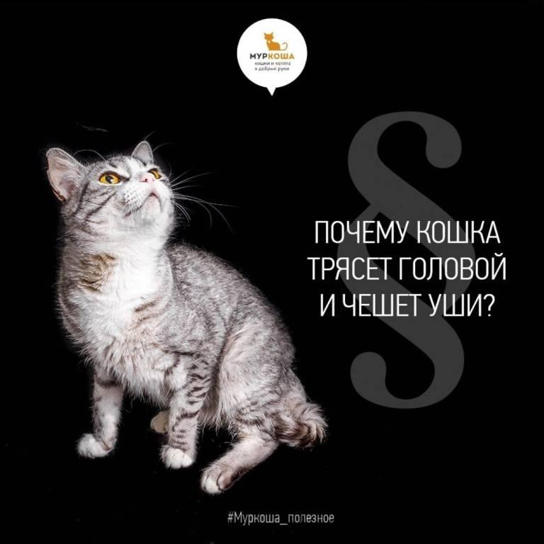 Почему кот трясет хвостом но не метит. почему коты дергают хвостом. общение головой с помощью головы