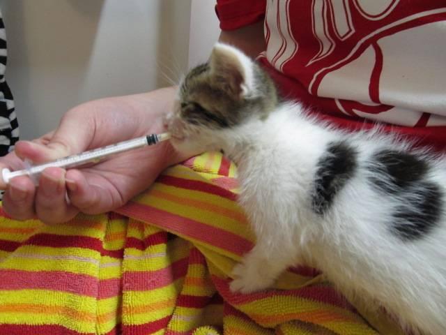 Рахит у котят — предупреждение и лечение болезни