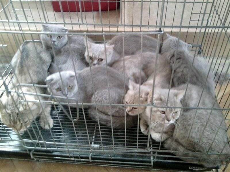 Разведение кошек как бизнес рекомендации и секреты