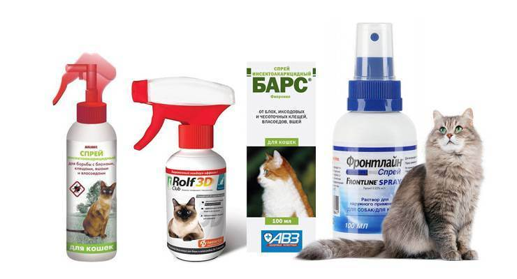 Как часто можно мыть кошку шампунем от блох: а как мыть кота?