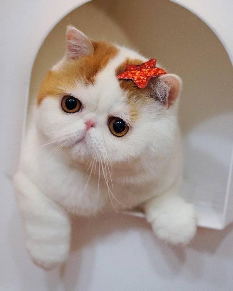 Породы милых котят: варианты с большими глазами и красивыми мордочками