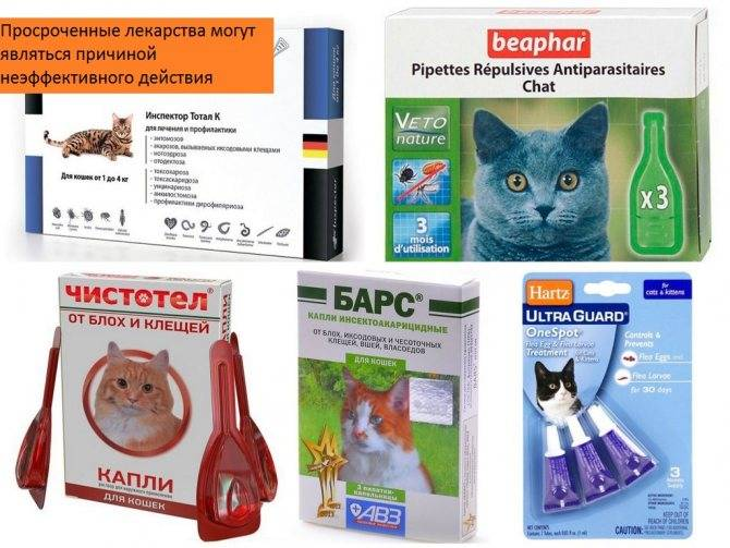 Правила нанесения лечебных капель для кошек для выведения блох у питомца