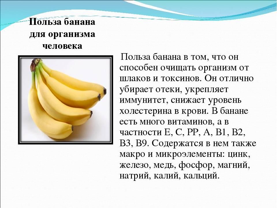 """Фрукты и овощи для кошки — обсуждение в группе """"кошки""""   птичка.ру"""