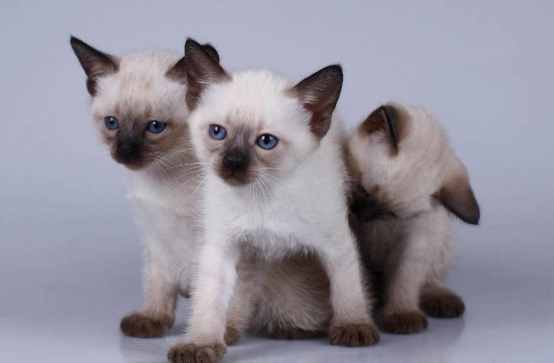 Как назвать котенка - самые красивые и интересные имена для котят. как выбрать имя для котёнка-мальчика любой породы и цвета как назвать котенка простые