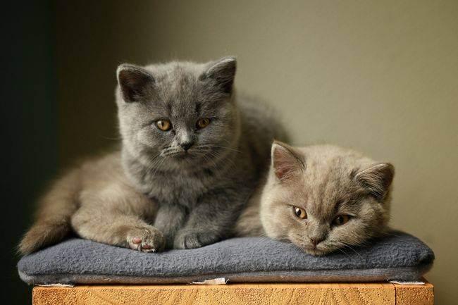 Питание кошки после болезни или операции