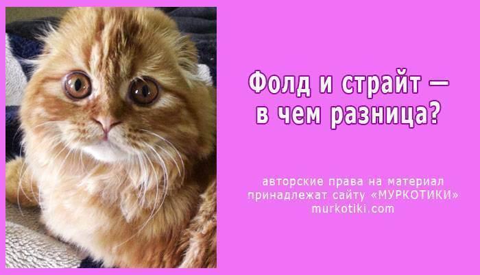 Что делать, если кот хромает на заднюю лапу?