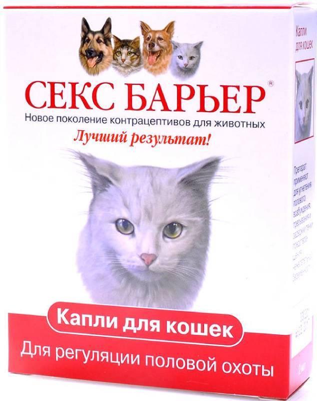 Наносит ли вред применение капель во время течки у кошек?
