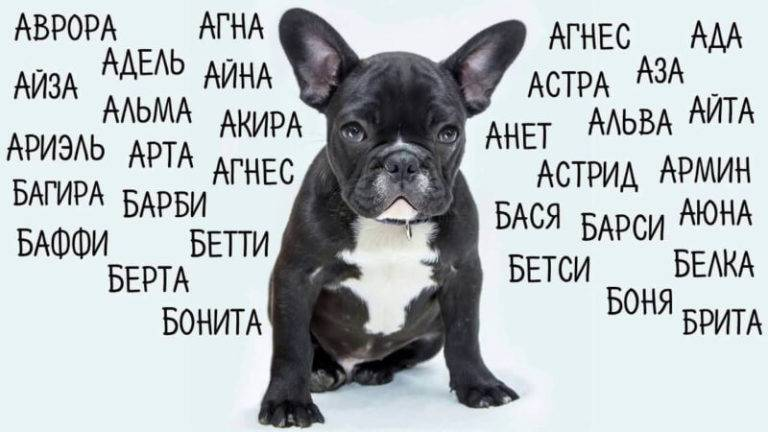 Легкие и красивые клички для собак, простые имена для мальчиков и девочек.