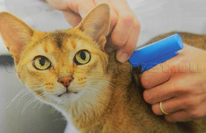 Чипируем домашних животных: кошек и собак