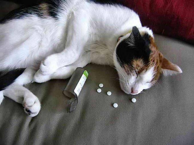 Симптомы и лечение отравления у кошек - wlcat.ru