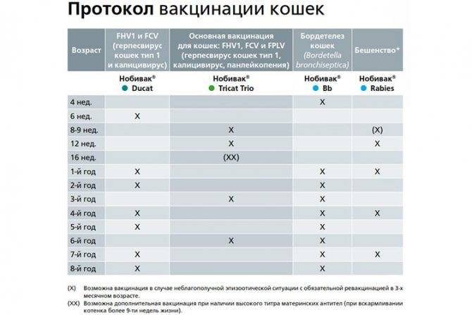 Прививки для кошек: от каких болезней, когда делать, график прививки для кошек: от каких болезней, когда делать, график