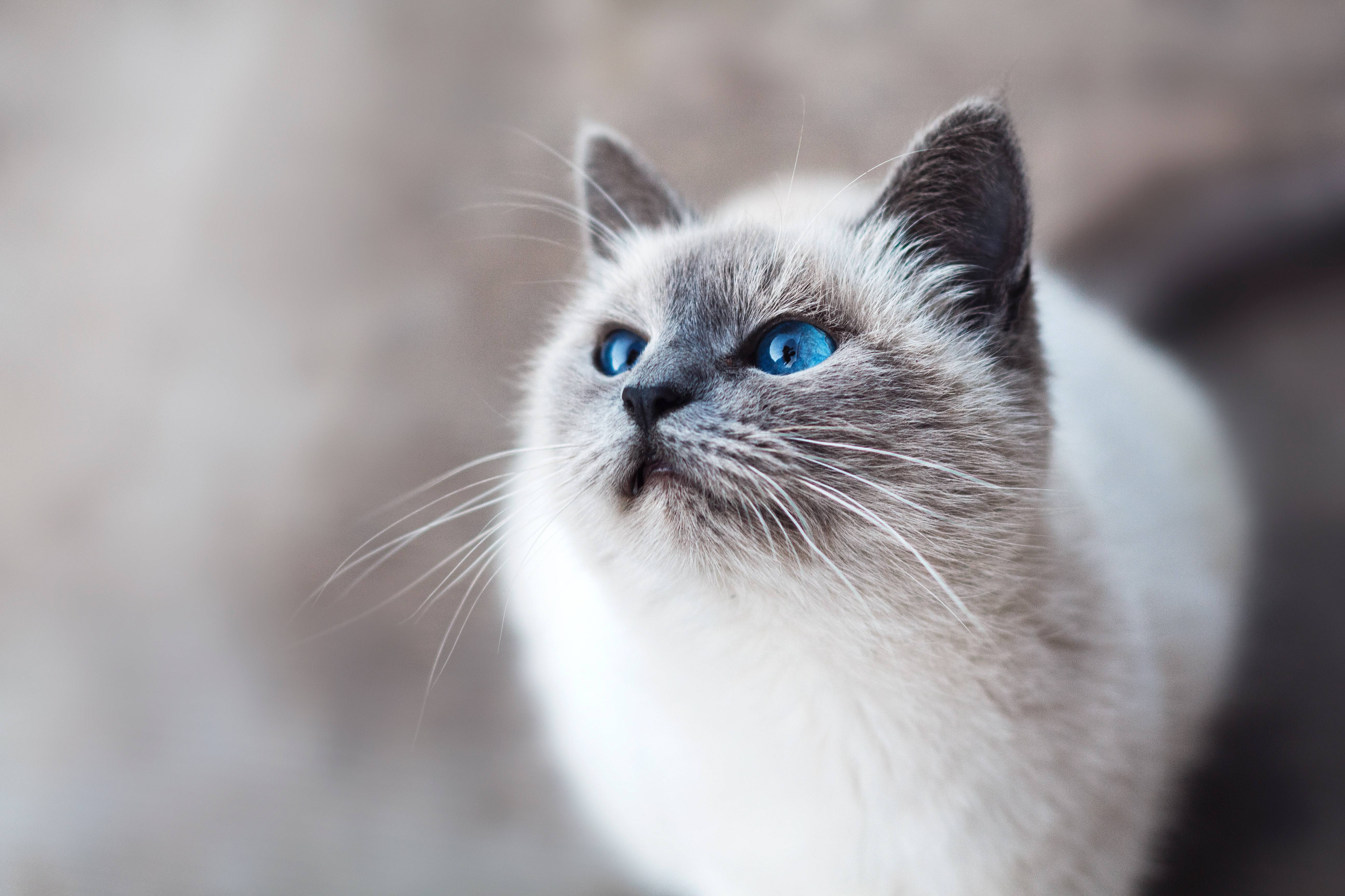 Возможные осложнения у кошки после родов: симптомы, диагностика, лечение