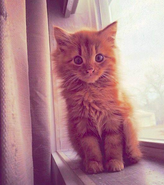 Как назвать рыжего котенка-мальчика. возможные варианты
