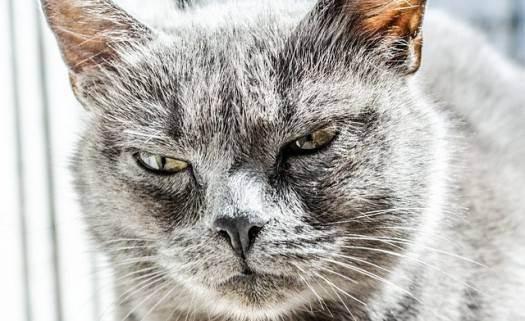 Осторожно: укус кошки
