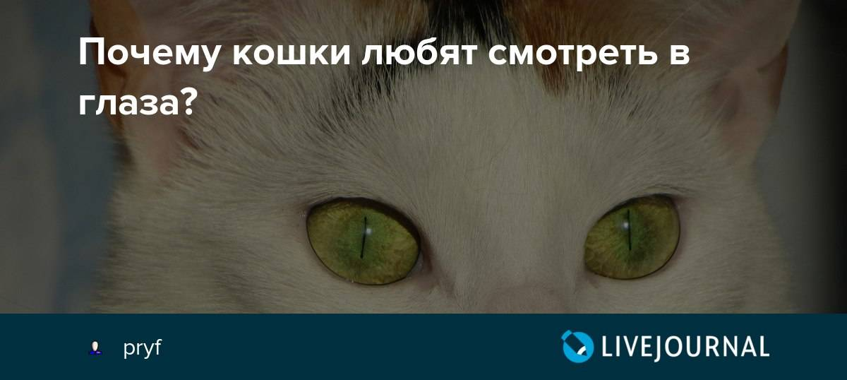 Почему нельзя смотреть в глаза кошке: поведенческие особенности и реальные факты