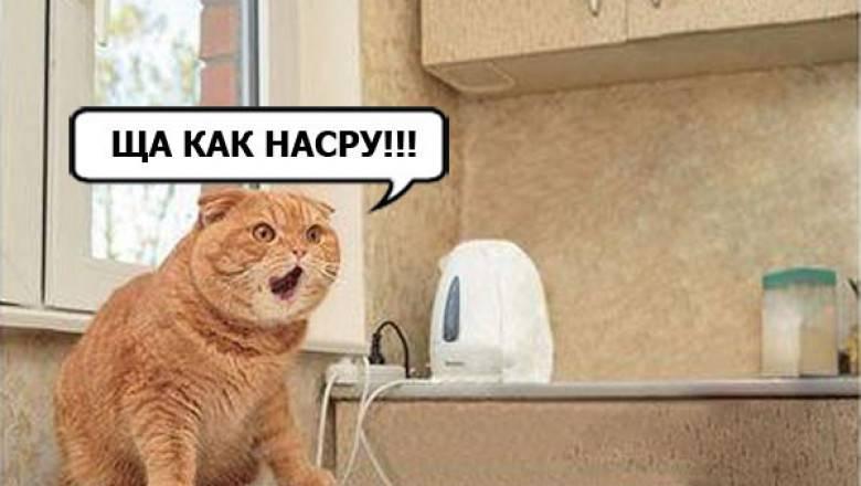 Кот пукает | энциклопедия домашних животных