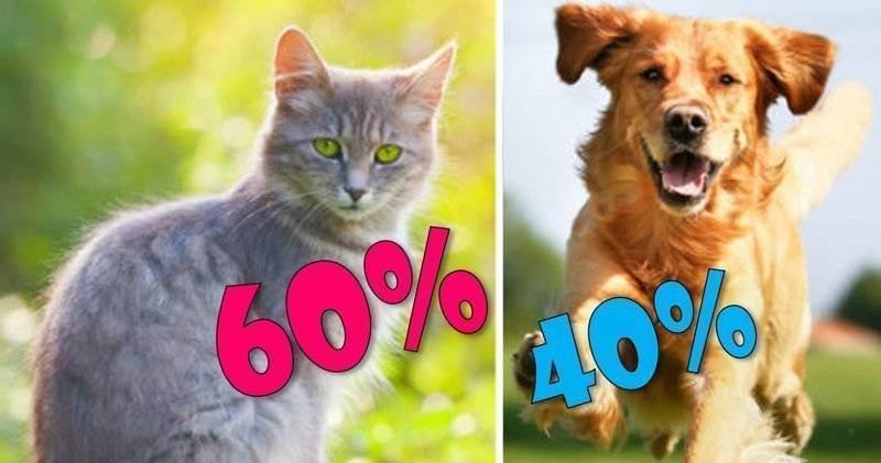 Кого выбрать — кошку или собаку?