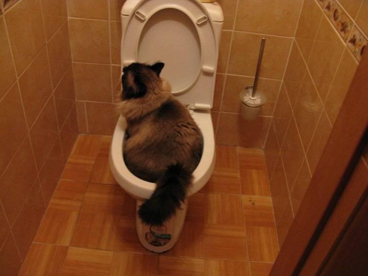 Как понять, что котенок хочет в туалет: признаки и сигналы