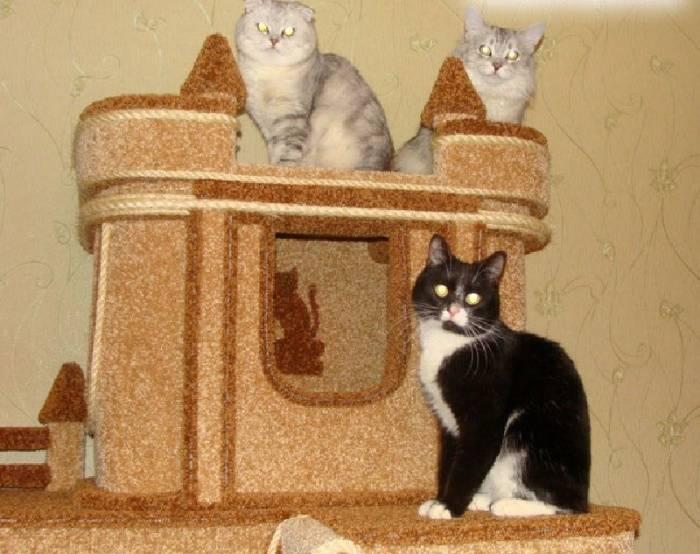 Порядок приучения котенка и взрослой кошки сидеть и спать в домике