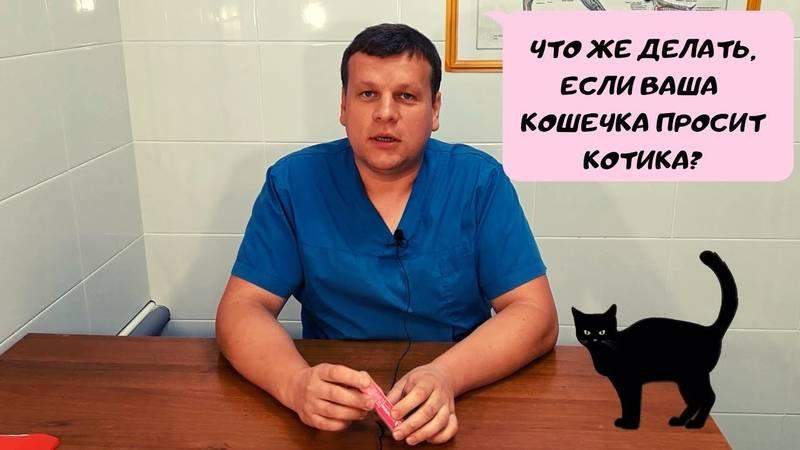 Что делать, если кошка хочет кота, методы успокоения, видео инструкция