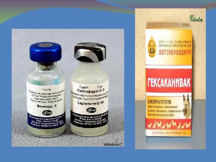 Лептоспироз у собак — диагностика и лечение заболевания