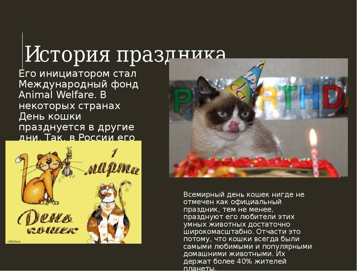 День кошек: когда и как отмечается кошачий праздник в мире, России и других странах?