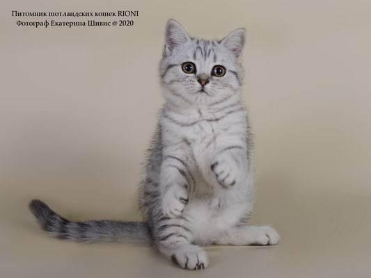 Ems коды пород и окрасов кошек (wcf)