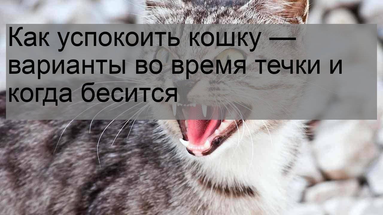 Что делать, если кошка просит кота, как помочь в домашних условиях