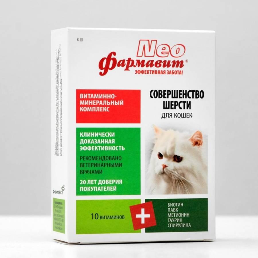 Витамины для котят: как улучшить здоровье вашего питомца