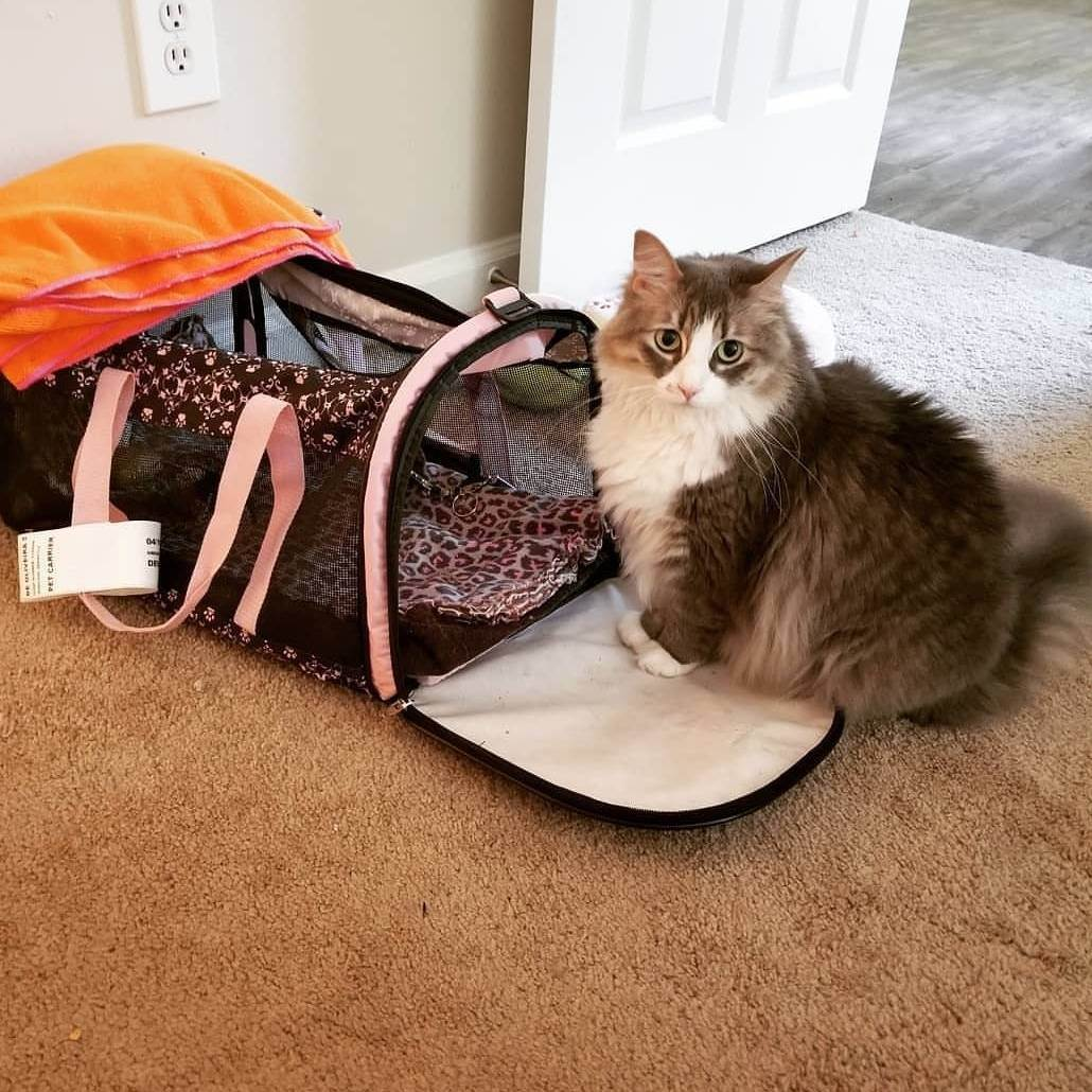 Плюсы и минусы различных переносок для кошек и котов