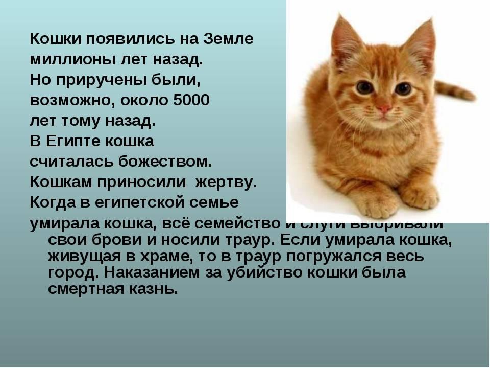 Откуда взялись кошки – версии и факты происхождения