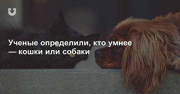 Кто умнее, кошки или собаки: сравнение интеллекта питомцев