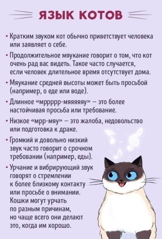Кот показывает язык: почему кошки высовывают кончик язычка и не убирают его?