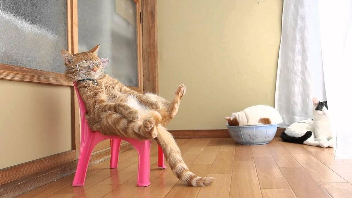 Как можно приучить кота спать с хозяином?